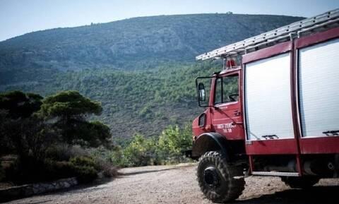 Πυρκαγιά στον Τύρναβο: Τουλάχιστον 320 πρόβατα κάηκαν στα Δελέρια