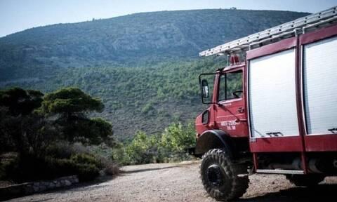 Πυρκαγιά σε δασική έκταση στη Μαγνησία