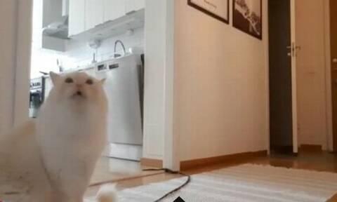 Είδε τι κάνει η γάτα της όταν φεύγει - Δεν την άφησε ποτέ ξανά μόνη