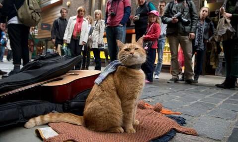 Πέθανε ο διασημότερος γάτος - Έκανε εκατομμυριούχο τον άστεγο ιδιοκτήτη του