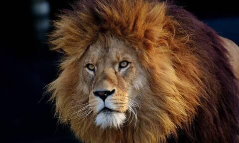 Θέλησε να χαϊδέψει λιοντάρι – Αυτό που συνέβη θα το θυμάται για πάντα (vid)