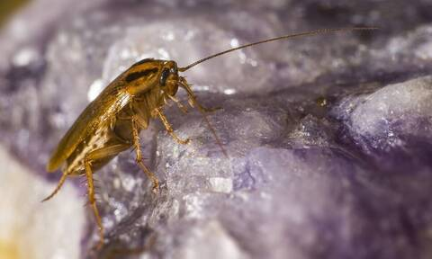 Έτσι θα διώξετε κατσαρίδες και κουνούπια από το σπίτι με φυσικό εντομοαπωθητικό (vid)