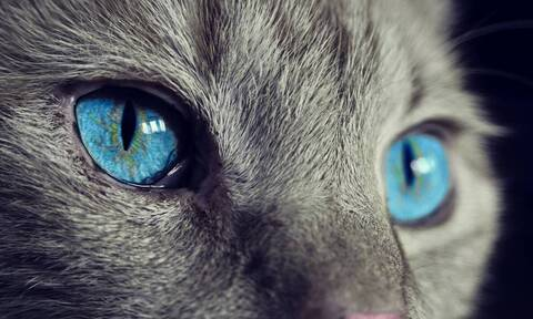 Νάρνια: Ο «διπρόσωπος» γάτος που έχει γίνει διάσημος στο διαδίκτυο (photos)