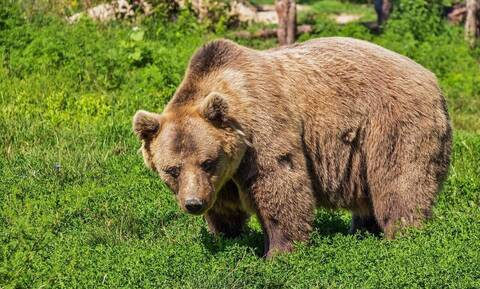Αρκούδα πήρε άνδρα στο κυνήγι - Απίστευτο αυτό που έγινε μόλις τον «έπιασε» (pics+vid)