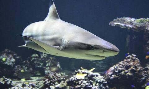 Εικόνες σοκ: Πατέρας γλύτωσε το γιο του από σαγόνια καρχαρία (σκληρές εικόνες)