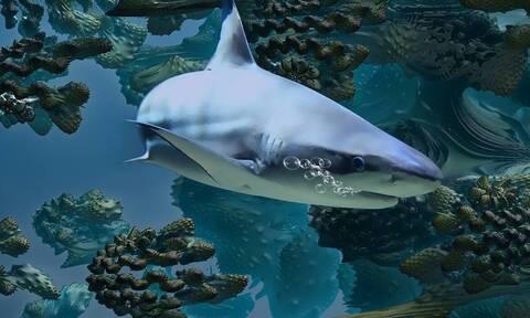 Εδωσε μάχη με καρχαρία! Μπορείτε να φανταστείτε ποιος επικράτησε; (photos)