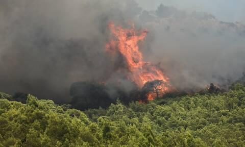 Φωτιά στην Κάρυστο: Συναγερμός στην Πυροσβεστική