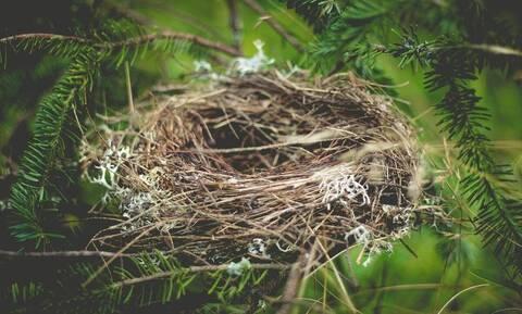 Έβαλε κάμερα σε φωλιά πουλιών - Ανατριχιαστικό αυτό που έγινε (vid)