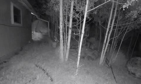 Τσέκαραν την κάμερα ασφαλείας στην αυλή - Δεν πίστευαν αυτό που είδαν (vid)