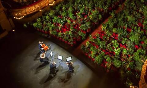 Δεν κάνουμε πλάκα: Οργάνωσαν αποκλειστική συναυλία για 200… φυτά!