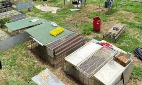 Φρίκη: Βρήκαν παιδί κλειδωμένο σε κλουβί - Ήταν μαζί με φίδια και ποντίκια