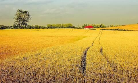 Αγρότες πήραν νέα έκταση αλλά δεν ήθελαν να αφήσουν το σπίτι τους - Δεν φαντάζεστε τι έκαναν (vid)