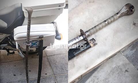 Θρίλερ στη Θεσσαλονίκη: Συνελήφθη 43χρονος με σπαθί σαμουράι