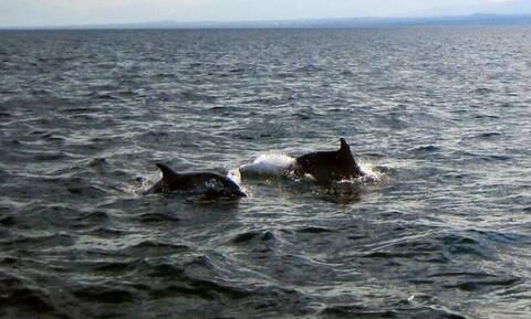 Θεσσαλονίκη: Δελφίνια εμφανίστηκαν στον Θερμαϊκό (vid)