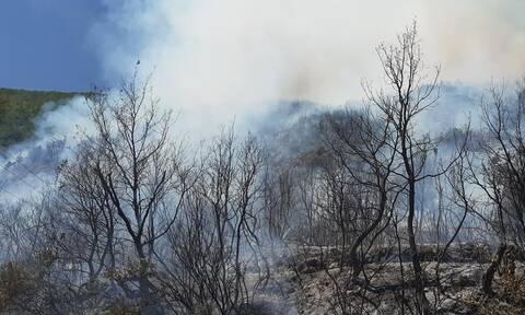 Μεγάλη φωτιά ΤΩΡΑ στη Μεγαλόπολη