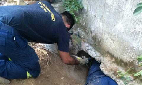 Κρήτη: Η Νίκη σώθηκε από τους άνδρες της Πυροσβεστικής (pics)