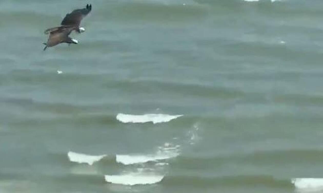 Απίστευτες εικόνες σε παραλία: Τι είδαν οι λουόμενοι πάνω από τα κεφάλια τους