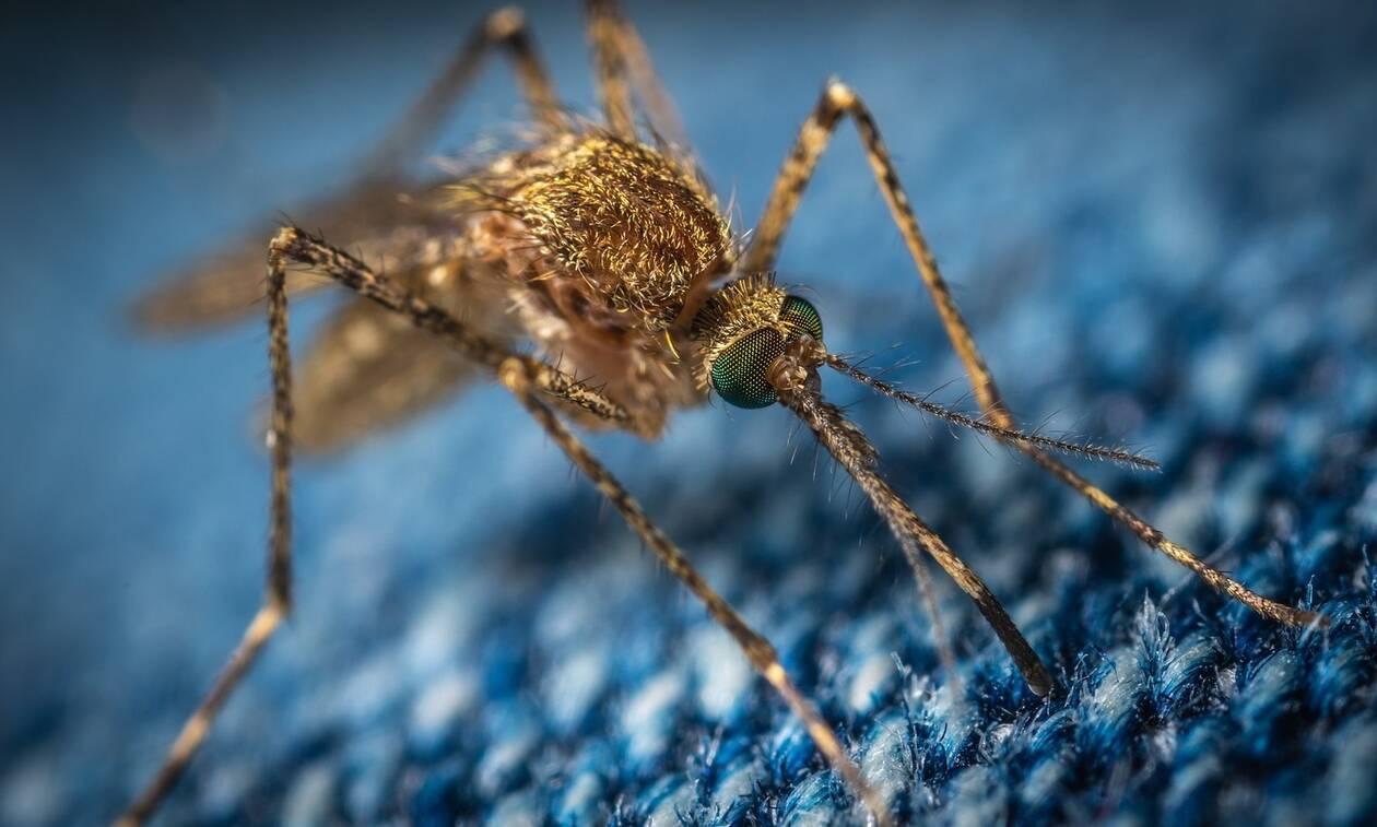 Μεγάλη προσοχή με τα κουνούπια - Πώς να προστατευτείτε από το κουνούπι - τίγρης