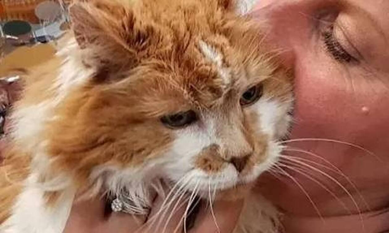 Πέθανε η γηραιότερη γάτα στον κόσμο - Πόσα χρόνια έζησε