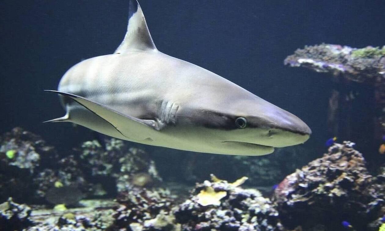 Τρόμος για ψαρά! Τεράστιος καρχαρίας έκανε σάλτο στο σκάφος του