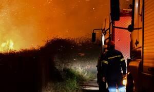 Φωτιά στην Αττική: Πυρκαγιά στον Γέρακα