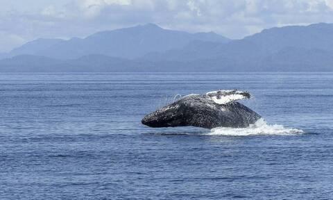 Μπλε φάλαινα κάνει «πιρουέτα» και «τρελαίνει» κόσμο (video)
