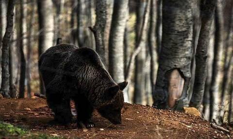 Καστοριά: Αυτός είναι ο 25χρονος που δέχθηκε επίθεση από αρκούδα (pics)