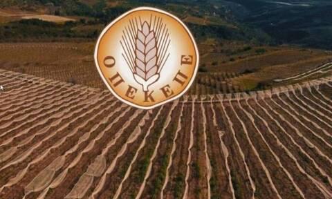 ΟΠΕΚΕΠΕ: Νέα πληρωμή σε αγρότες - Δείτε ΕΔΩ τα ποσά