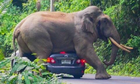 Εντυπωσιακό! Ελέφαντας τσακίζει τζιπ με μία μόνο κίνηση! (vid)