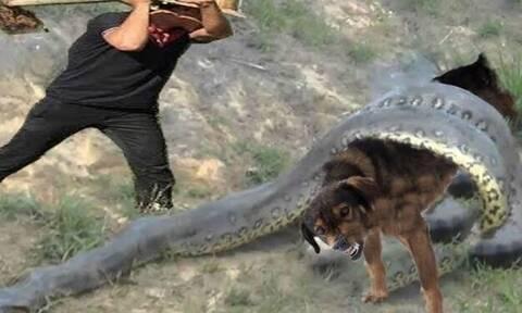 Απίστευτο: Έσωσε σκύλο από τον πύθωνα την τελευταία στιγμή! (vid)