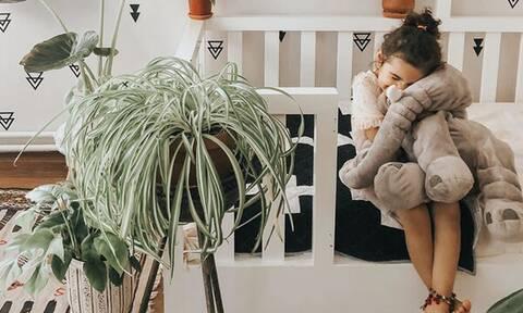 Φυτά εσωτερικού χώρου: Τα οφέλη και ιδέες διακόσμησης για το σπίτι