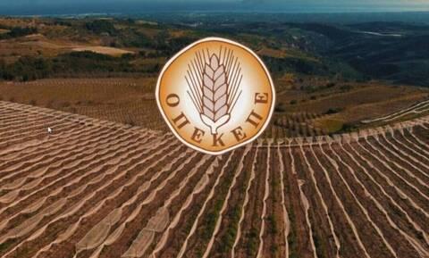 ΟΠΕΚΕΠΕ: Νέα πληρωμή 1,5 εκατ. ευρώ σε δικαιούχους αγρότες