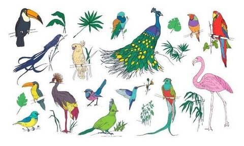 Ποιο πτηνό αντιστοιχεί στον μήνα που γεννήθηκες;