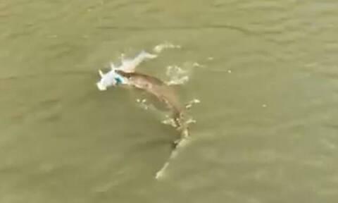 Τυχερή ψαριά - Δείτε πόσα έπιασε με μία πετονιά (vid)