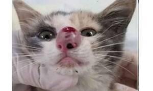 Δεν θα πιστεύετε τι βρήκαν ΜΕΣΑ στη μύτη της γάτας! (video)