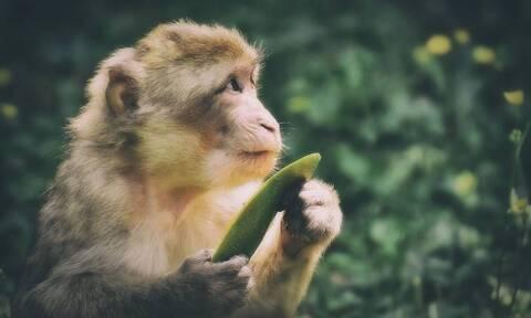 Μαϊμού την… πέφτει σε τουρίστρια και έγινε viral (vid)