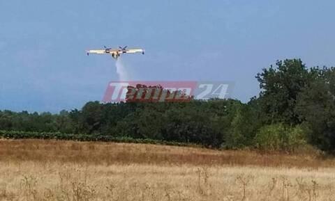 Пожар в области Ахаиа уничтожил сельскохозяйственные угодья