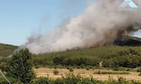 Φωτιά Σάπες: Χωρίς ενεργό μέτωπο η πυρκαγιά
