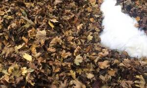 Σε αυτή τη φωτογραφία υπάρχει ένας σκύλος - Μπορείς να τον βρεις;
