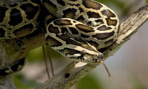 Φίδι δάγκωσε νεαρό στο πρόσωπο – Δείτε τι του έκανε (pics)
