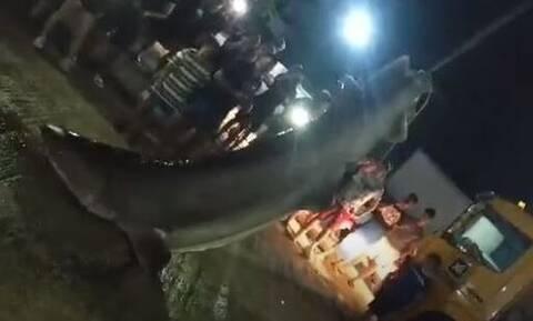 Πάτρα: Δεν πίστευαν στα μάτια τους - Δείτε τι έβγαλαν ψαράδες (pics)