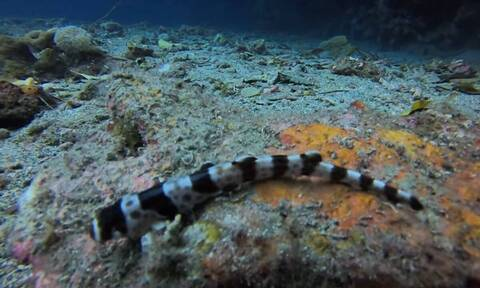 Ανακαλύφθηκε νέο είδος καρχαρία που «περπατάει» (vid)