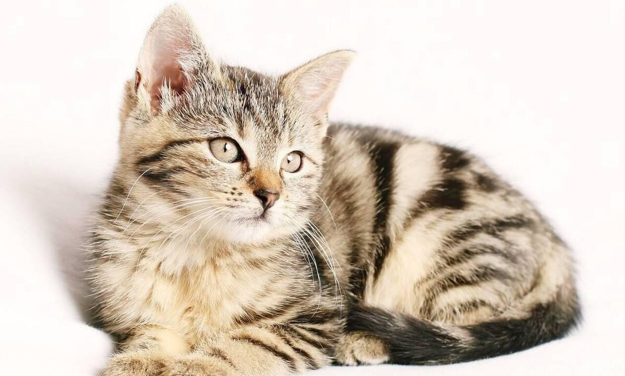 Γάτα επέστρεψε σπίτι με απειλητικό σημείωμα στο κολάρο από γείτονα (pics)