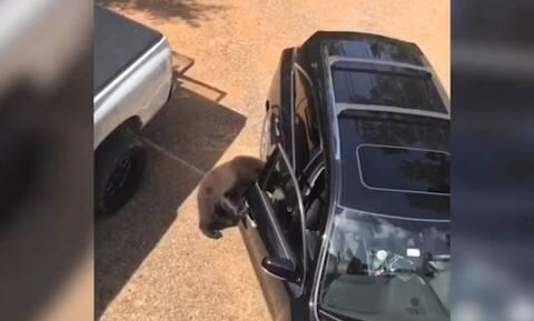 Αρκούδα ανοίγει αυτοκίνητο και το… επιθεωρεί (vid)