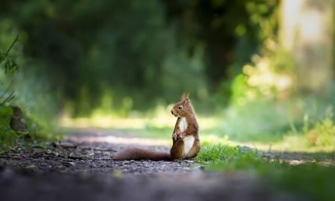 Ανησυχία στις ΗΠΑ: Σκίουρος βρέθηκε θετικός στην… βουβωνική πανώλη!