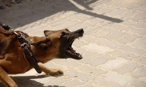 Αγοράκι έσωσε την αδελφή του από σκύλο - Παραμορφώθηκε το πρόσωπό του