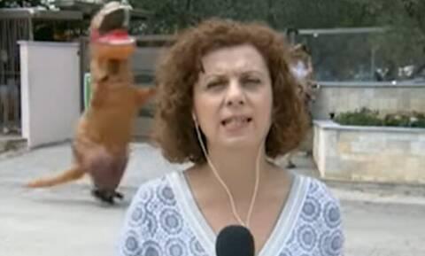 Επικό: Ενας... δεινόσαυρος έτρεχε πίσω από την ρεπόρτερ της ΕΡΤ!