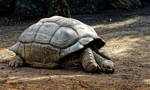 Βρέθηκε χελώνα με «ράμφος αετού» και «ουρά κροκόδειλου» (pics)