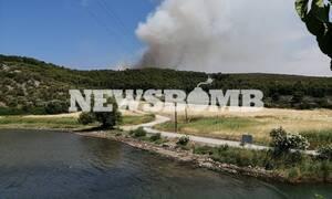 Καρακάντζας στο Newsbomb.gr: Ένα ενεργό μέτωπο στο Θεολόγο – Άμεση η επέμβαση της Πυροσβεστικής