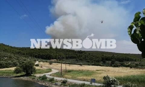 Φθιώτιδα: Υπό πλήρη έλεγχο μετά από πολύωρη μάχη η μεγάλη φωτιά στο Θεολόγο